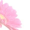 RHS Tatton Park Flower Show 19-23 July